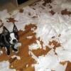 Mi vida, a través de los perros (XLI)