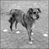 Mi vida, a través de los perros (VIII)