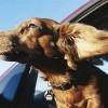 Mi vida, a través de los perros (XII)