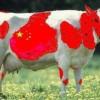 El país de la mala leche y de la escasez de huevos.