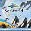 Crónica de Dos Venezolanos Atrapados por la Magia de los Parques de Disney: El Simulacro de Sea World