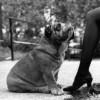 El Arte de Ser Un Perro