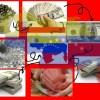VENEZUELA:  UNA NACIÓN DE ESTAFADO(RE)S MORALES.
